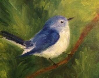 Baby Bluebird