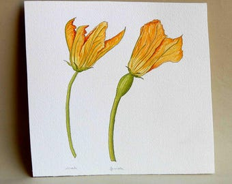 Squash Flowers watercolor painting