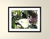 White Butterfly Printable...