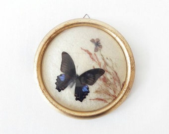 Vintage Butterflies Dome Glass Framed Papilio India
