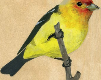 "Reproduction of original ""Western Tanager"" painting"