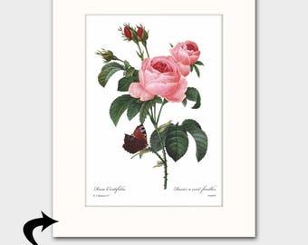 Victorian Decor, Tea Rose Art w/Mat (Vintage Botanical Print, Pink Home Wall Decor,) --- Matted Redoute Flower