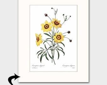 Daisy Art Print w/Mat (Yellow Room Decor, Vintage Country Art, Botanical Print) Matted Redoute Artwork