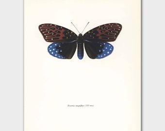 Butterfly Decor (Vintage Loft Wall Art, 1960s Mid Century Artist) --- Blue Velvet No. 90-2