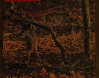 November 8, 1954 LIFE MAGAZINE Life In A Woodland New Jersey Deer In Late Autumn