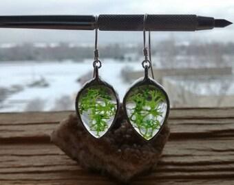 Real Moss Earrings, Silver earrings, moss terrarium earrings, natural moss, Green Moss Pendant , Moss Jewelry, Nature Jewelry