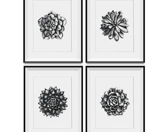 Set of 4 x A4 prints - original succulent pencil drawings