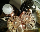 XXL 1 & 1/4+LB AMMONITE Pair- Ancient Fossil, Crystallized Geode, Healing, Ancient Magic, Past Life, Wedding, Altar Piece, Chakra 102.00US