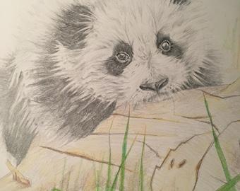 Panda Cub - ORIGINAL Pencil Drawing - Nursery Art, Nursery Decor, Animal Art, Baby Animals, Gift, Original Artwork, Wall Art, Home Decor