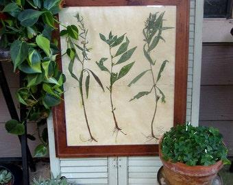 Botanical Art: Love Me or Leave Me