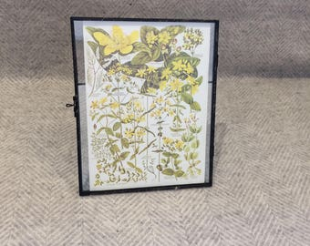 Genuine vintage framed botanical drawing, flower illustrations, botanical print, floral, in glass frame, Green leaves yellow