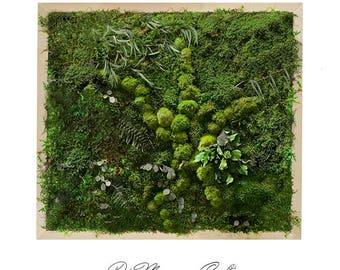 "Moss Wall Art 16x16"". Natural Home Decor. Preserved Moss and Plants. Moss Art. Green Art. Eco Decor. Natural Plant Deco. Plant Decor."