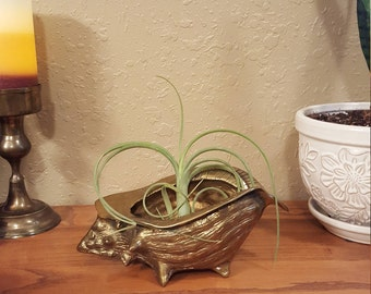 Vintage brass conch shell planter.  Small shell planter.