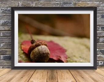 Autumn Acorn | Digital Download