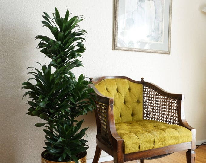 Vintage Tufted Lime Green and Woven Cane Armchair