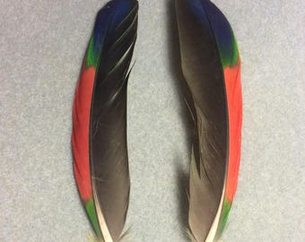 "Matching pair of 6"" black, red, blue and green double yellow headed Amazon parrot wing feathers."