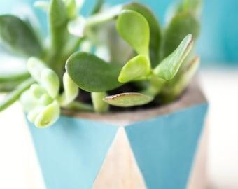 Succulent photograph, turquoise