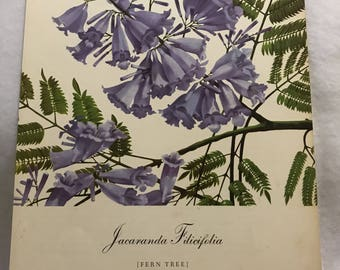 Jacaranda Filicifolia (Fern Tree) Bernard & Harriet Pertchik 1951 Print from Flowering Trees of the Caribbean Alcoa Steamship