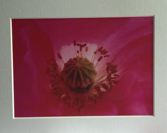 Cup Cake, Mounted Photographic Print 9 x 7 inches. Flowers, Macro, Pink, Wall Art, Home & Office Decor