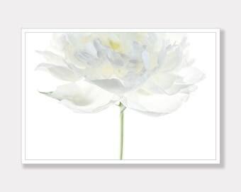 Peony, Peony Flower Photo, Printable Photo, Botanical Photo, Modern Photo Art, Instant Digital Download, Photo Download, Instant Download
