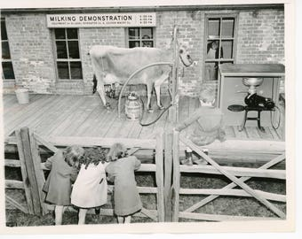 Vintage antique black and white photo from Farm in the Zoo.