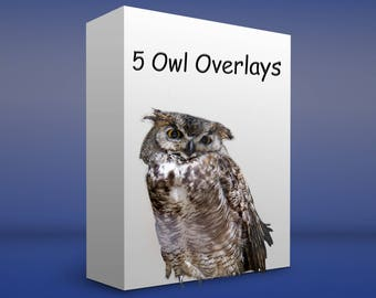 5 PNG files Owl Overlays