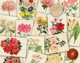 30%OFF Vintage Botanical Illustration , Vintage Floral Illustration , Scrapbook digital paper 8x12 Buy 2 Get 1 FREE