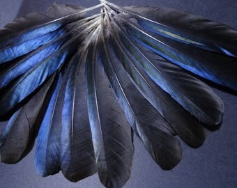 Set of 5 natural feathers of magpie wings