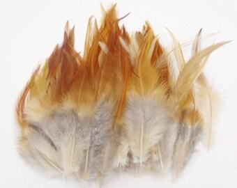 MAXI (PROMO) set of 50 various confections M113 premium feathers
