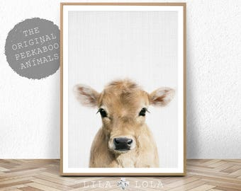 Calf Print, Baby Cow Farm Animal Wall Art, Nursery Decor, Large Printable Poster Digital Download, Farmhouse Decor, Colour Photo Babies Room