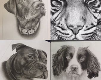 Custom Pet/Animal Charcoal Drawing