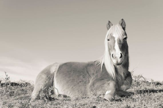 BLONDIE. Horse Photography, New Forest Pony, Equine Print, Limited Edition Print, Black And White Print.