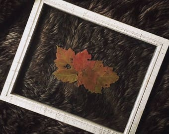 "8"" x 10"" Framed Flora- White/Red/Brown"