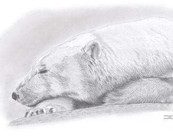 POLAR BEAR Limited Edition art drawing print signed by UK artist
