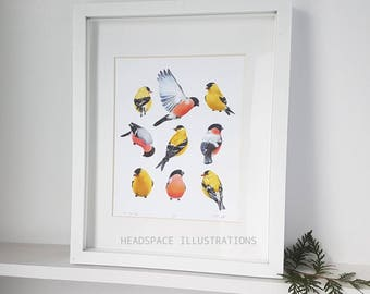 Finches Bullfinch Golden American Goldfinch Yellow Finch Colored Pencil Nursery Baby Garden Art Print by Headspace Illustrations