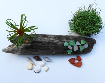 Driftwood pieces - Driftwood with air plant - Artificial air plant - DIY driftwood kit - Faux air plant - Lake Erie driftwood