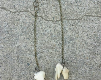 Coyote Tooth Earrings