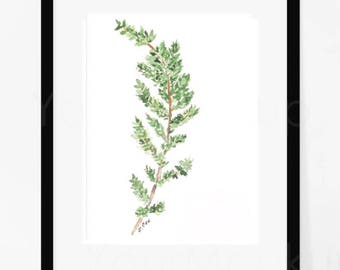Herb Painting, Kitchen Art, Herb print, Original Watercolor artwork,  Botanical watercolor, Thym painting
