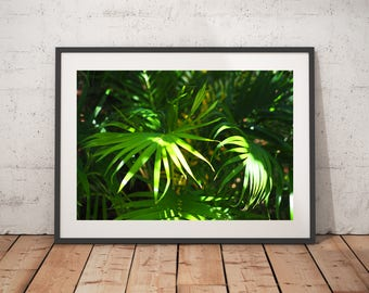 Miami Palms, Art Prints, Wall Decor, Nature Photography
