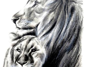 Lion, drawing