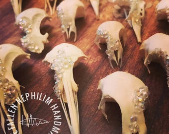 Sea Bird Skulls all collected from the beach, pick your own just 10 pounds each! Macabre Oddities, Curio Oddity, Crystal Geode Style Pieces