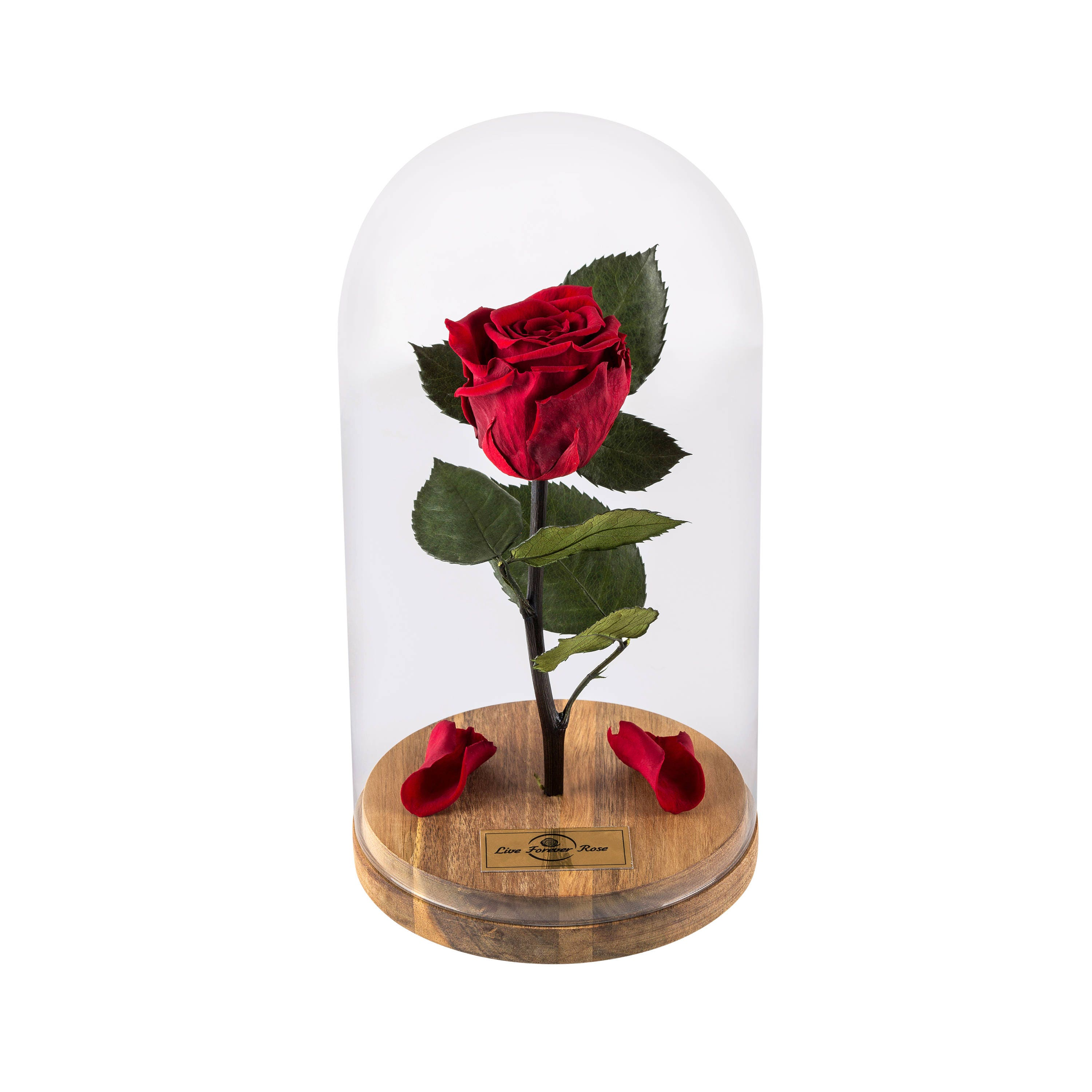 beauty and the beast rose live forever rose in glass live. Black Bedroom Furniture Sets. Home Design Ideas