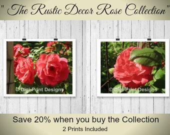 Rose Photo, Floral Photograph, Botanical Photo, Rose Print, Macro Photograph, Floral Nature Photo, Still Life Photo, Fine Art Photography