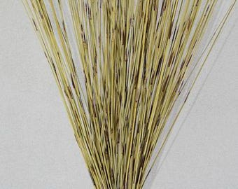 Green Pan Reed | Dried Pan Reed | Dried Branches | Dried Decor