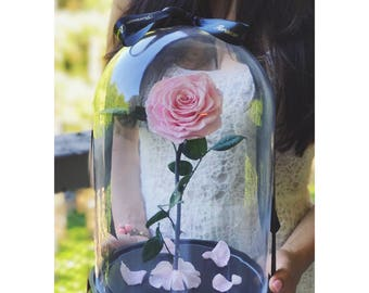 Beauty And The Beast Enchanted Rose, Rose In A Dome, Live Up To 5 Years, Preserved Rose, Belle Rose, Beauty And The Beast Party, Belle Rose