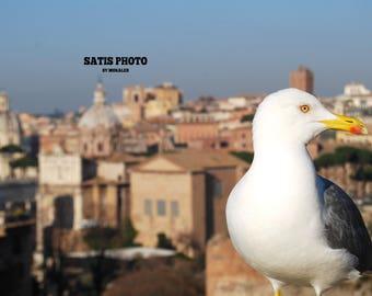 Roman seagull
