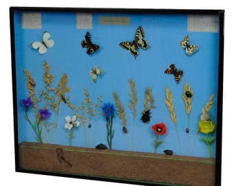 a great vintage school teaching display of the insects of the grassland