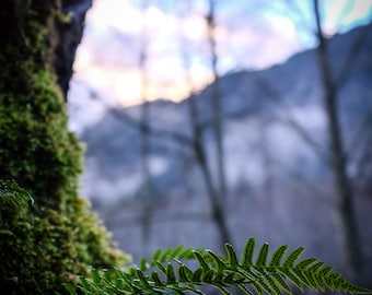 Olympic National Park | Fern Photo
