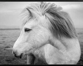 Horse Print, Horse Photography, Pony Print, Horse Wall Art, Horse Printable Art, Printable Horse, Horse Art Print, Black and White,Horse Art