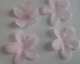 pale pink flower petal